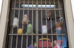 Γυναικείες Φυλακές