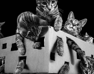 cat γατα
