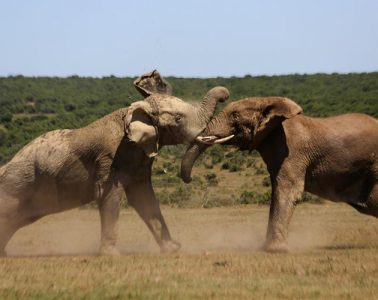 ελέφαντες ποντίκια